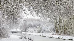 A dream come true! (karindebruin) Tags: zuidholland nederland canon winter snow thenetherlands hellevoetsluis voorneputten forest bos sneeuw deer hertjes brug bridge