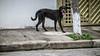 12dezembro-8 (Laércio Souza) Tags: laerciosouza rolesp zonaleste saopaulo brasil brazil fotografia cotidiano 365dias umanodefotos