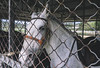 铭湖牧场 (美麗世界的孤兒) Tags: 马