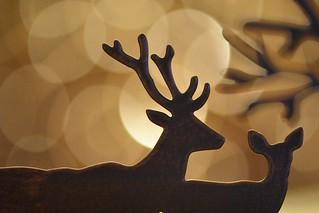 Red Deer Bokeh - Happy Christmas - HMM