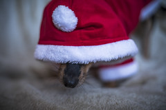 Is it all over yet? (Paul`s dog photography) Tags: