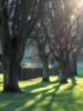 20171226-0179 (www.cjo.info) Tags: adaptall2 edinburgh europe europeanunion holyroodpark pentax pentaxk3ii sp scotland tamron tamronadaptall2sp70150mmf28softfocus unitedkingdom westerneurope againstthelight contrejour digital flare flora landscape plant shadow softfocus tree winter wintermorning wintersunshine