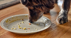 Sharing My Stew (Feeling Better...Still Slow To Comment!) Tags: ddc 2248 share stew shizandra plate licking food crumbs