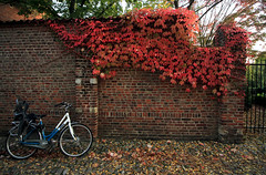 automne (EliB.) Tags: canon eos 550d leuven belgium belgio belgique bike bikes bicicletta biciclette autumn automne autunno autunnale red orange tree trees muro wall brickwall mattone mattoni foglia foglie fogliesecche albero alberi natura nature travel travelling traveller travelphotography travels leaf leaves color colors colori rouge rosso arancione feuille feuilles arbre arbres vert verde