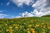 花東風彩 (啊痛) Tags: taiwan tokina1116f28 canon 台灣 花蓮 花蓮金針花季 藍天白雲 landscapes photo clouds