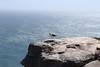 Seagull on a Cliff (Rckr88) Tags: seagull cliff seagullonacliff robbergnaturereserve plettenbergbay southafrica robberg nature reserve plettenberg bay south africa sea water ocean coast coastline naturalworld outdoors travel travelling westerncape gull gulls birds bird