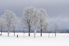 winter, walking, watching (michaelmueller410) Tags: snow schnee winter weis white trees man walking walker cluds cloudy wolkig wolken himmel bäume baum schild spaziergang dezember clausthal harz oberharz ladscape landschaft