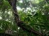 Cát Bà forest (grapfapan) Tags: nature hiking green djungle trees forest vegetation halongbay island cátbà vietnam travel