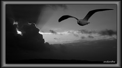 1 of 5 Winter depression photos in the nature (2) (andantheandanthe) Tags: melancholy gloomy gloomyness winter dull dark gloom melancholic sad terrible depression depressing glooming dispiret downhearted grey gull seagull clouds storm