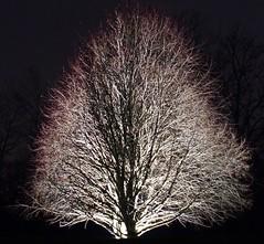 DSC01903 (simonbalk523) Tags: tree night light nature sony photography