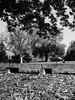 Downtown (davekrovetz) Tags: homeless park tree bench nature rangefinder bessa film monochrome charlottesville downtown