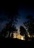 winterevening (Mange J) Tags: k3ii magnusjakobsson pentax sigma1020 sverige sweden värmland beauty blue clear evening forrest nature pentaxart silhouette sky sunset tree winter wood kil värmlandslän se