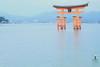 宮島 (miyunico) Tags: 広島 厳島神社 廿日市市 プチ旅行 大鳥居 fujifilmxt1 flektogon35mmf24 ミルキー色