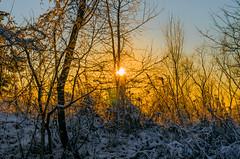 (ErrorByPixel) Tags: yellow blue handheld errorbypixel winter snow colours colors sky sunset sundown light tree bush sun k5 pentax pentaxk5 5018 pentaxart smc pentaxda 50mm f18 smcpentaxda50mmf18 sunlight