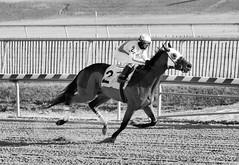 "2017-12-26 (67) r4 Steve Hamilton on #2 Cobh - monochrome (JLeeFleenor) Tags: photos photography ""laurel park"" maryland md ""maryland races"" horse jockey جُوكِي ""赛马骑师"" jinete ""競馬騎手"" dżokej jocheu คนขี่ม้าแข่ง jóquei žokej kilparatsastaja rennreiter fantino ""경마 기수"" жокей jokey người horses thoroughbreds equine equestrian cheval cavalo cavallo cavall caballo pferd paard perd hevonen hest hestur cal kon konj beygir capall ceffyl cuddy yarraman faras alogo soos kuda uma pfeerd koin حصان кон 马 häst άλογο סוס घोड़ा 馬 koń лошадь laurelpark marylandraces races outdoors outside winter cold"