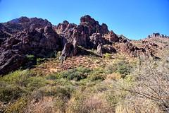 (biosynthesis24) Tags: superstition mountain goldcanyon arizona southwest desert cacti saguaro family hike adventure fun funinthesun sun sunny clear green rabiesalert apachejunction mesquite beautiful gorgeous spiritual