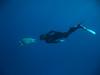 the song of innocence (anaguma shashin o toru) Tags: gorgonia egypt marsa alam underwater canon e1 freediving snorkeling red sea