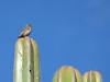 Desert (Blancof) Tags: desert bird cactus desierto santiagoacatepec