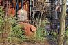 Duisburg - »Landschaftspark Nord« - ehemaliges August-Thyssen-Hüttenwerk (037) (Pixelteufel) Tags: duisburg nordrheinwestfalen nrw landschaftsparknord thyssen stahlwerk hüttenwerk werksgelände industrie industrieanlage industriebrache marode desolat verfallen verrottet verrostet zugewachsen zugewuchert
