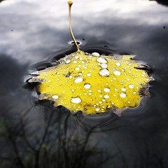 Leica v-lux 3     Leaf in winter🍁 (lucamarasca1) Tags: vlux leicalens leica dslr digital capture inexplore laquintaessenza focus work perspective reflections water acqua closeup yellow giallo macro dettagli details colors color colore colorato colorful lake autunno autumn winter inverno foglia leaf leaves