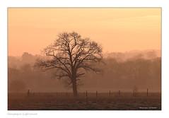 Le jour se lève sur ma campagne (Bruno-photos2013) Tags: arbre sunrise campagne campaign anjou maineetloire contrejour paysage paysageligérien paysdeloire brume hiver landscape
