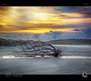 Beached Below the Strange Sky (tomraven) Tags: driftwood beach silhouettes sky clouds sun tomraven sunset aravenimage coast coastal q42017 fujifilm xs1