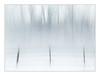 Winter's Desolation (GAPHIKER) Tags: trees winter hff fence field icm blur texture lenabemanna