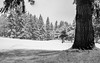 Christmas Day @ Fairwood Golf & CC #2 (Perry J. Resnick) Tags: 2017 pjresnick perryjresnick pjresnickgmailcom pjresnickphotographygmailcom ©2017pjresnick ©pjresnick 35mm fujinon35mm fuji35mmf14 light fuji fujifilm atmosphere atmospheric digital shadow texture shadows angle perspective naturallight white xf fujinon resnick outdoor rectangle rectangular xpro2 fujifilmxpro2 lines 4x6 cascadefairwood snow forest tree trees sky winter landscape wood