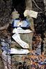 Tronc bulgare (ZUHMHA) Tags: bulgarie bulgaria hiver winter buzludja tronc arbre tree wood snow panneau feuille foliage feuillage letter lettre mot word sign texte text écriture flèche