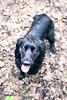 Dog waiting for her ball (TRNCL94) Tags: dog walk forest nikon 35mm fetch animals