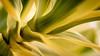 Organic Perspective (www.leonardocarneirofotografia.com) Tags: plant plantas growing green canon7dmkii canon raynoxdcr250 raynox 50mm stm leocarida riograndesdosul tramandaí nature natureza macro macrophotography planet planeta light luz dia vegetaçao vegetation vegetal brazil brasil