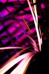 Pinky glow (jmiller35) Tags: stems leaves eos canon glow haze indoors fern houseplant plant purple red