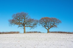 Mr & Mrs........ (klythawk) Tags: trees leaves snow bench grass blue sky nature winter hedge sunlight brown grey green black white olympus omd 1240mm dorkethead calverton nottingham klythawk