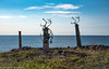 Antlers (JohannesLundberg) Tags: chukchipeninsulatundra asia arcticislands2017 pevek eutheria mammalia antler graveyard rangifertarandus chukotkaautonomousokrug theria russia expedition chaunskydistrict cervidae rangifer artiodactyla arktiskaöar2017 chukotskyavtonomnyokrug pa1104 reindeer ren певе́к пээкин ча́унскийрайо́н чаанрайон чуко́тскийавтоно́мныйо́круг yanranay chukotskiy ru