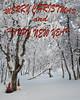 Merry Christmas (Fjällkantsbon) Tags: doroteakommun sverige fjäll december borgafjäll lappland evamårtensson merrychristmas christmas lapland mountainbirch birch mountain jul