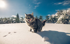 Bobo (Vagelis Pikoulas) Tags: cat gree vilia snow day canon 6d landscape tokina village winter december 2017 1628mm view perspective action