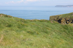 IMG_3721 (avsfan1321) Tags: ireland northernireland unitedkingdom uk countyantrim ballycastle carrickarede carrickarederopebridge nationaltrust landscape green blue ocean atlanticocean