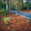 Autumn Road - Fuji Provia 100F (magnus.joensson) Tags: sweden swedish skåne skäralid söderåsen autumn color rolleiflex 35 fuji provia 100f 6x6 medium format e6 epson v800 scan