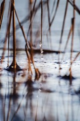 Details (Reetta Virtanen) Tags: macro canon7d canon bokeh simple perfection nature reflection detail