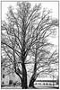 Winter in Freiberg (unukorno) Tags: freiberg sachsen deutschland torstensonlinde torstenssonlinde winter snow sw bw blackwhite monochrome frame rahmen baum linde lime tree