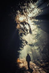 Follow Me Into The Woods - III (der_peste) Tags: forest forestpath raysoflight raysofgod godrays sunrays sunlight woods woodland woman person silhouette light shadow lightandshadow dark sonya7m2 sel2470gm