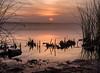From Byron Tract (mikeSF_) Tags: california delta oldriver sacramento sanjoaquin byron tract mikeoria 645 645z dfa55 55mm sunrise wwwmikeoriacom