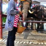 2017 05 - Thailand - 034 thumbnail