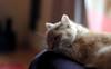 Felis silvestris catus (missbutterflies) Tags: felis catus chat cat neko felin nikkor50mmf14d pet