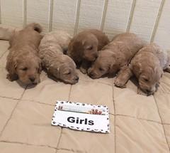 Kasey Girls 1-6