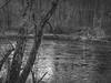 tributary, French Broad River, urban park, Asheville, North Carolina, Mamiya 645 Pro, mamiya sekor 80mm f-2.8, 12.30.17 (steve aimone) Tags: tributary frenchbroadriver river reflections trees landscape urbanpark asheville northcarolina mamiya645pro mamiyasekor80mmf28 rolleirxp400 moerschecofilmdeveloper 120 film 120film mediumformat blackandwhite monochrome monochromatic