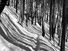 fekete-fehér tél / black and white winter (debreczeniemoke) Tags: tél winter túra hiking hegy mountain gutin erdély transilvania transylvania hó snow táj land tájkép landscape erdő forest fa tree fekete fehér feketefehér black white blackandwhite bw olympusem5
