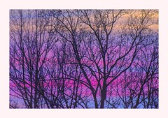Trees in Winter — Image 14 (George McHenry Photography) Tags: trees wintertrees winter silhouettes morning sunrise newyearseve