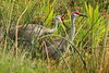 3S5X9842  Sandhill Cranes (Eileen Fonferko) Tags: birds animal sandhillcranes nature wildlife