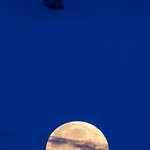Silhouette of a bird in the sky above the full moon thumbnail